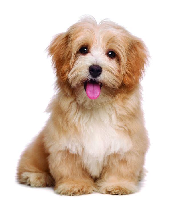 Percepción sensorial en caninos